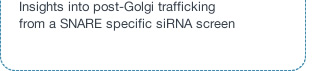 Insights into post-Golgi trafficking from a SNARE specific siRNA screen