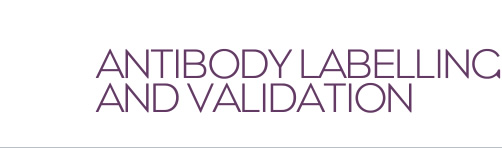 Antibody Labelling and Validation