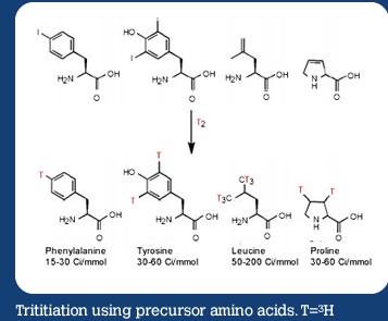 Trititiation using precursor amino acids. T=3H