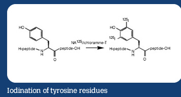 Iodination of tyrosine residues