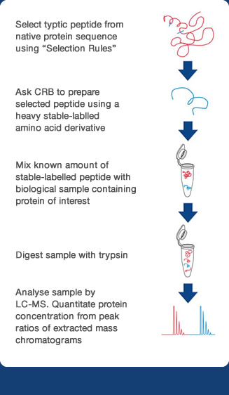 Quantitate protein concentration from peak ratios of extracted mass chromatograms