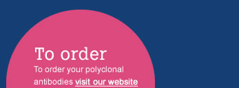 To order your polyclonal antibodies visit our website