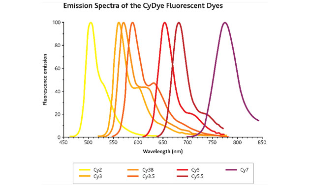 CyDye-fluorescent-spectra