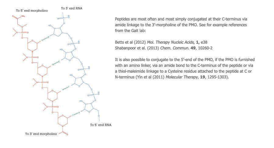 Peptide conjugates diagram