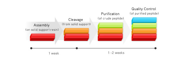 Custom peptide synthesis process
