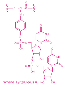 Nucleopeptide layout